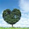 Keep a green tree in your heart