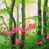 Beautiful Spring ...