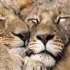 cuddling each other