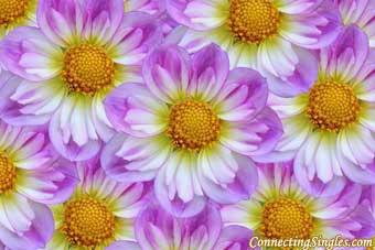 Daisy Day ecard