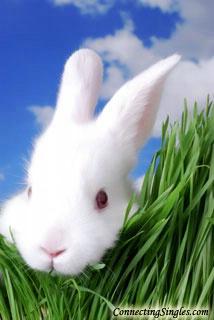 My snuggly bunny ecard