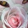 kitty and a rose ecard