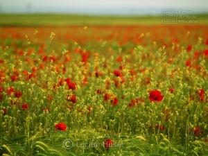 flowers of love ecard