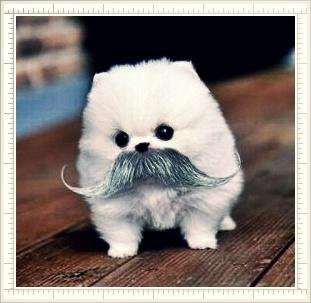 Hi there! Do you think I'm cute? ;-p ecard