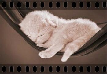 Sleeping kitty ecard