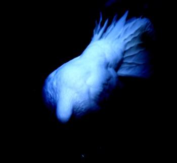Feeling Blue,Missing You ecard
