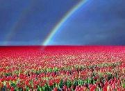""""""" A Rainbow """" ecard"""