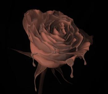 Choco-Rose ecard