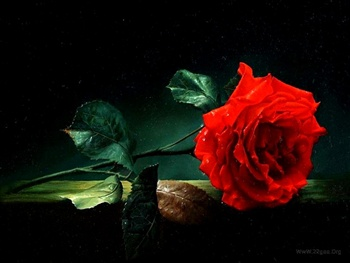 One rose for.... ecard