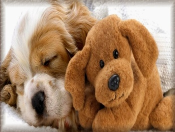 Let's Cuddle!!... ecard