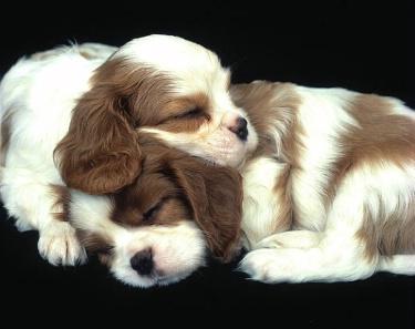 I Love Puppies! ecard