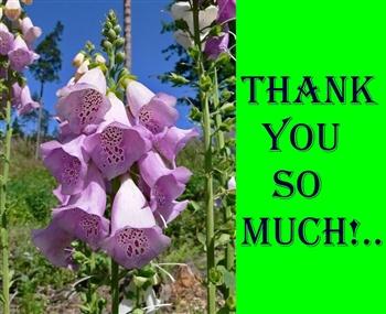 Thank you... ecard