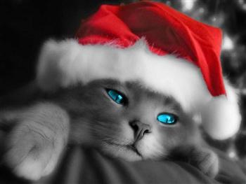 A LOVE ME TENDER CHRISTMAS ecard