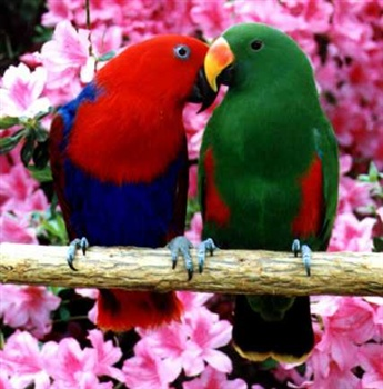 Love's Embrace ecard