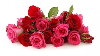 Red Rose Flowers. ecard