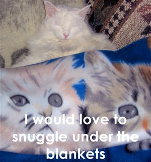 Snuggle ecard