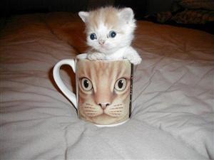 little kitten ecard
