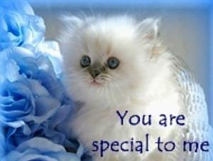 Resultado de imagem para you're so special, cats