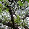 Apple Tree eCard