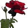 Happy V Day Sweetheart