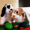 Happy Easter Kisses