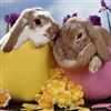 Happy Easter Kisses...