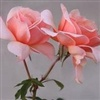 Forever In My Garden eCard
