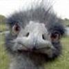 Cute chick eCard