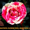 A beautiful flower for a beautiful lady eCard