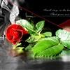 Sacrifice of Flower for love eCard