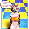 HappY Birthday Cute Cat Cup Cake