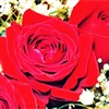 Red Roses For My Love eCard