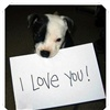 I love you cute dog eCard
