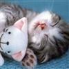 Good Night My Kitty eCard