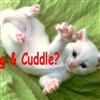 Hug & Cuddle?