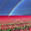 """"""" A Rainbow """""""