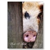 1 MARCH NATIONAL PIGS DAY eCard
