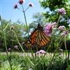 Lifes Nectar