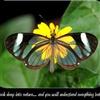 Natures Wisdom Inspirational eCard
