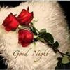 GOOD NIGHT eCard