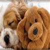 Lets Cuddle