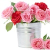plant a rose to