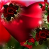 You are the ROSE of my heart