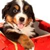 puppy love eCard