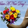 Wishing you a nice day