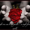A Single Rose eCard