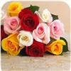 Roses Rainbow eCard