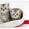 meow meow meow eCard