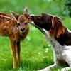 Natures Kiss eCard