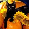 Autumns Purr eCard